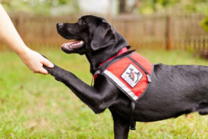 How Are Service Dogs Trained?