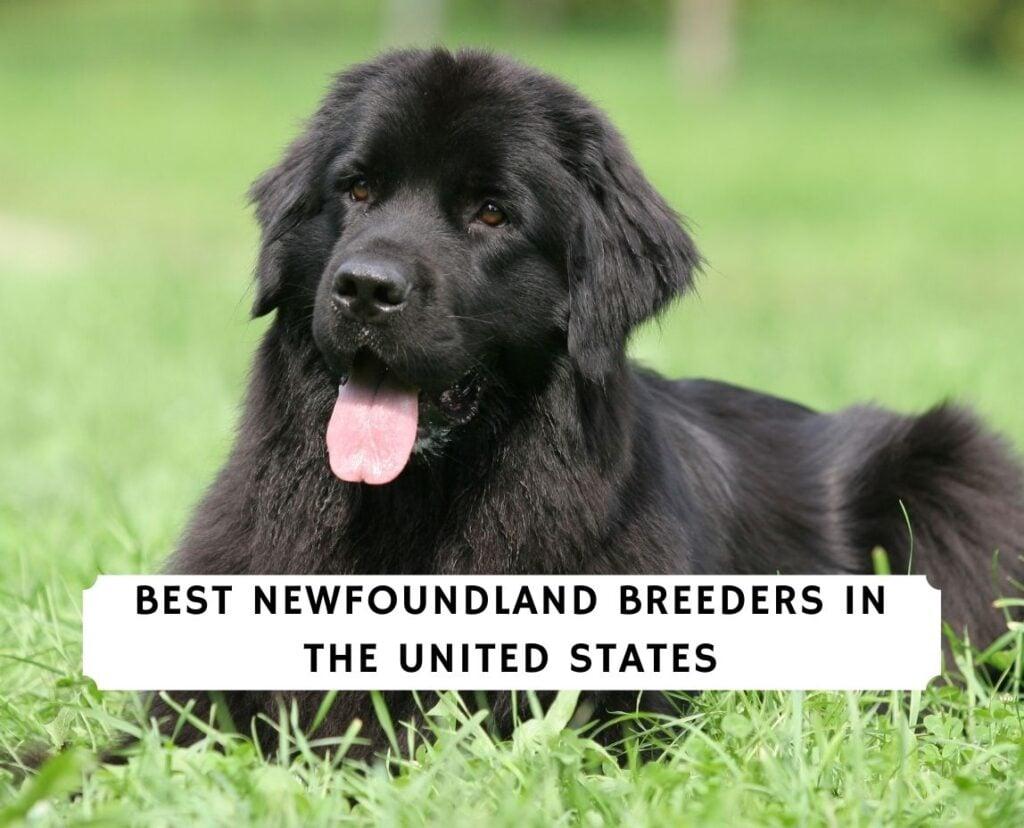 Newfoundland Breeders