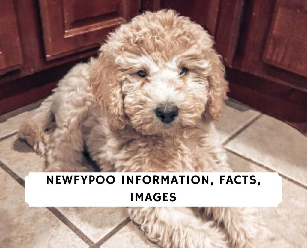 Newfypoo
