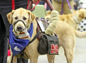 Tasks a Service Dog Needs to Perform