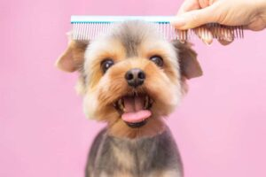 Teach Your Dog to Be Groomed