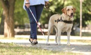 Traits That Help a Dog Become a Service Dog