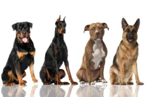 Why Are These Dog Breeds Considered Dangerous