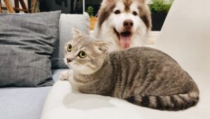 Why Do Dogs Try to Mate With Cats