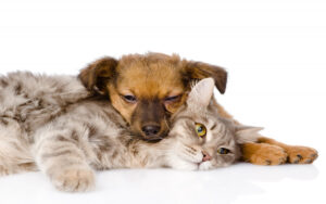 Why You Should Not Try Mating Dogs With Cats