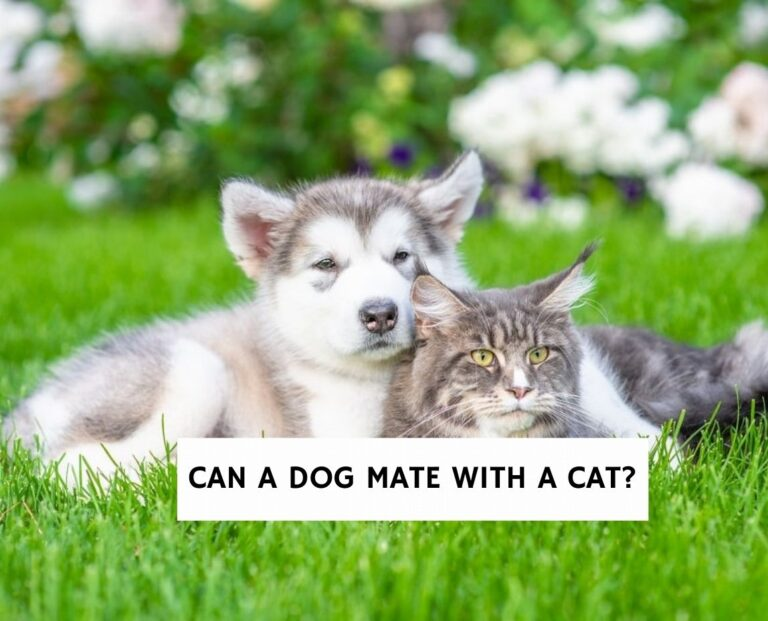 Can a Dog Mate With a Cat?