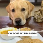 Can Dogs Eat Pita Bread?