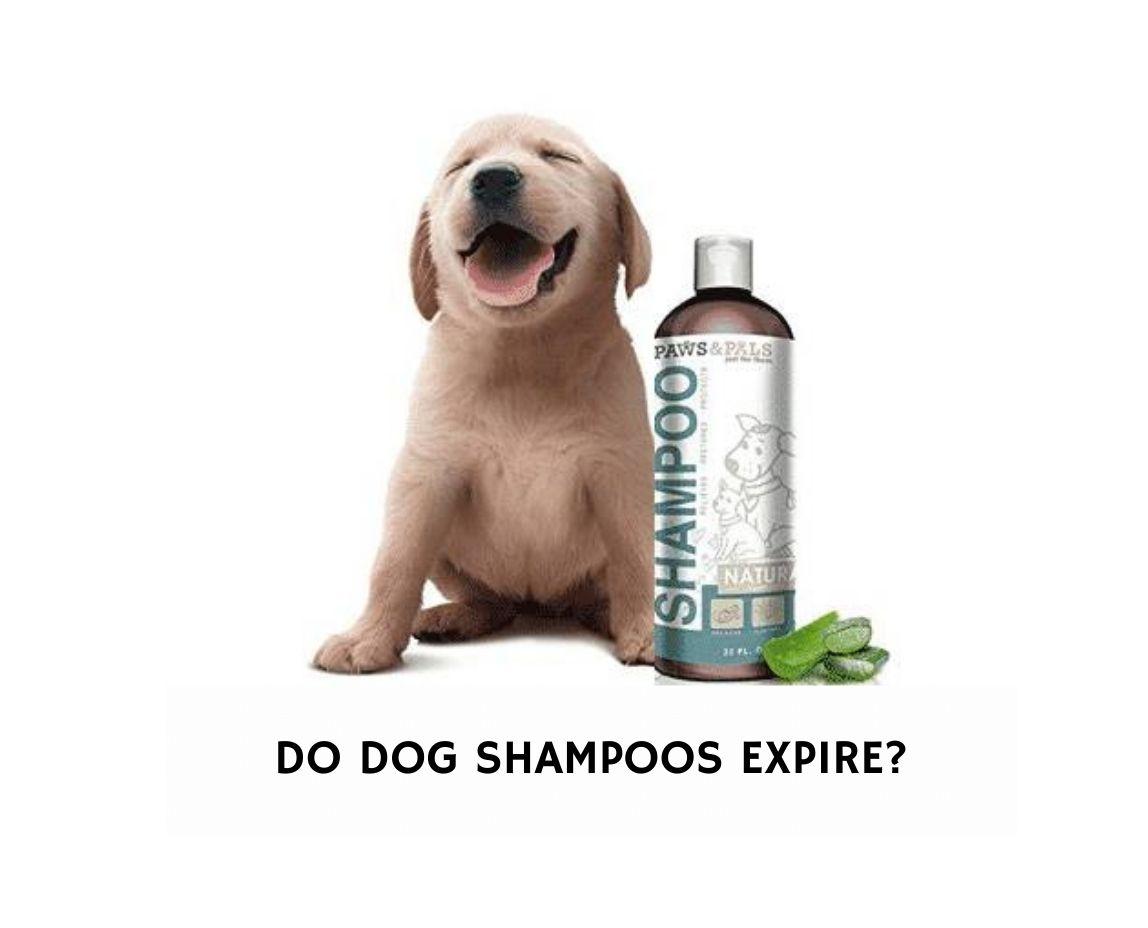 Do Dog Shampoos Expire?