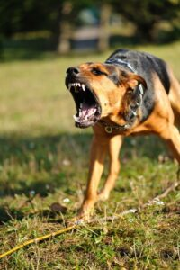 How Can Shock Collars Affect a Dog's Behavior?