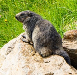 A Bit About Groundhogs