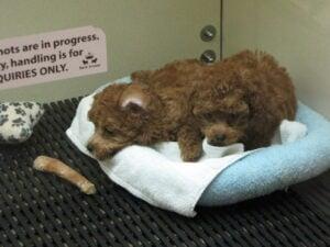 Bark Avenue Puppies
