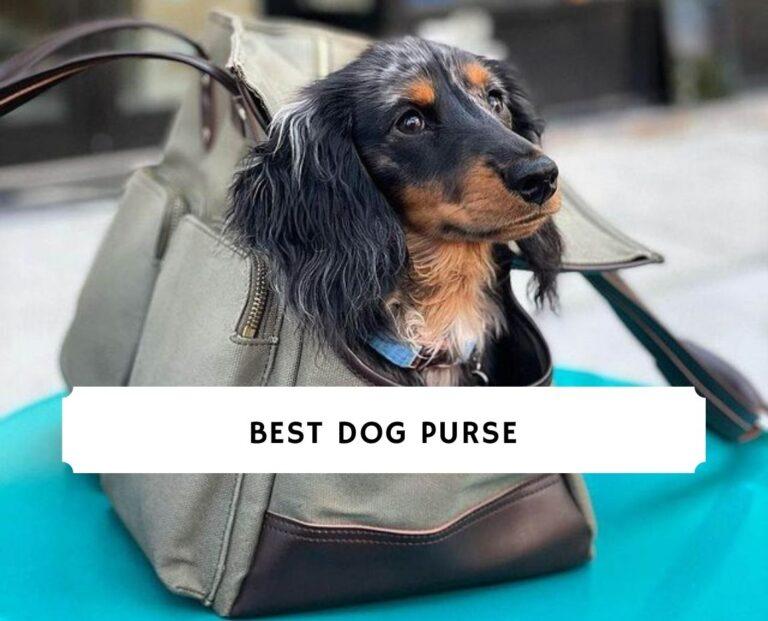 Best Dog Purse