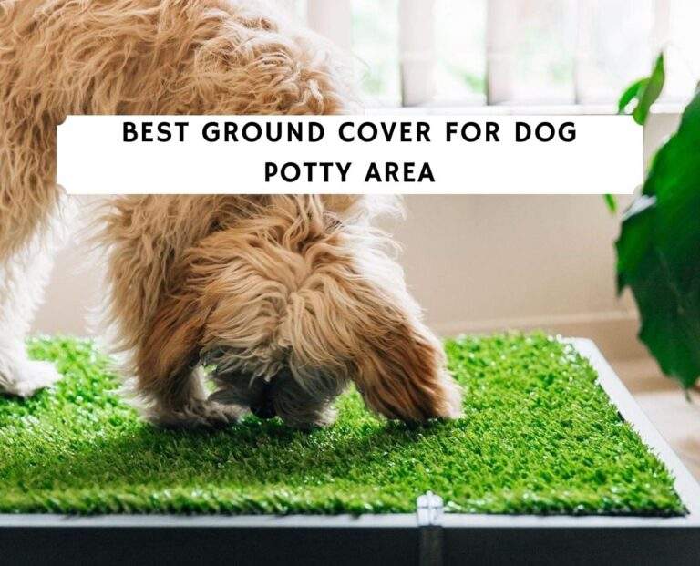 Best Ground Cover for Dog Potty Area