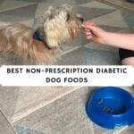 Best Non-Prescription Diabetic Dog Foods