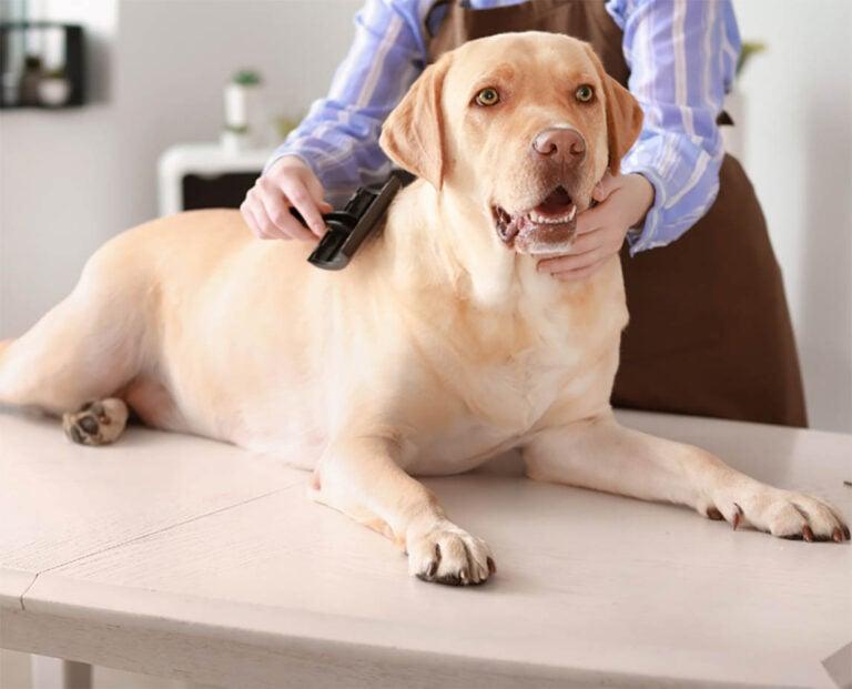 Best Slicker Brush For Large Dogs