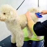 Best Slicker Brush For Poodles