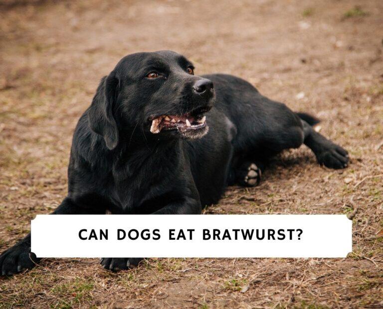 Can Dogs Eat Bratwurst