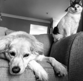 Conclusion For Can a Dog Mate with a Cat