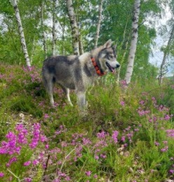 Conclusion For Dogtra Pathfinder Review