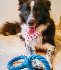 Create a Diversion for Your Dog