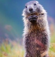 Do I Live Close to Groundhogs