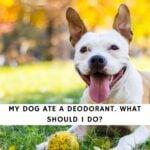 Dog Ate Deodorant