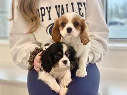 Furrylicious Puppy Boutique