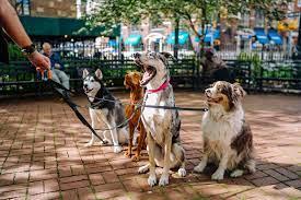 Kingdom Dogs