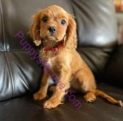 Puppys N Love