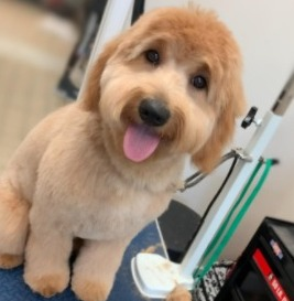 Reasons For Dogs Losing Their Hair