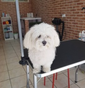Reasons For Tipping Dog Groomers Less