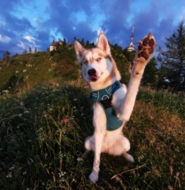 The Two Fear Phases of Development For Dogs