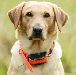 Waterproof E-Collar For Dogs