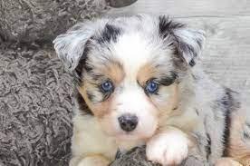 Wayne Puppies