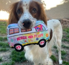 What You'll Get From BarkBox