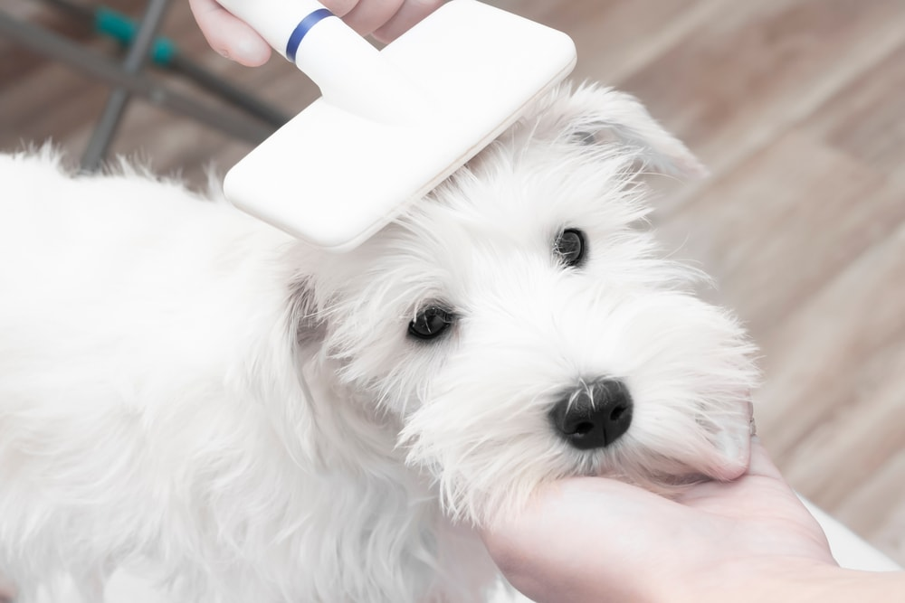 What is a slicker brush for dogs