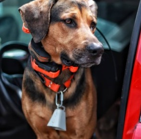 What is an E-Collar For Dogs