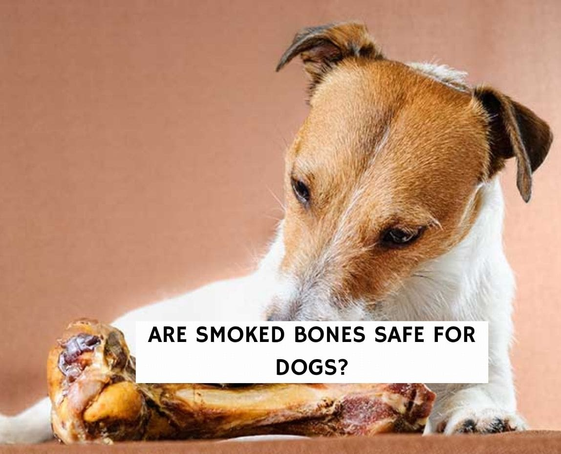 Are Smoked Bones Safe For Dogs?