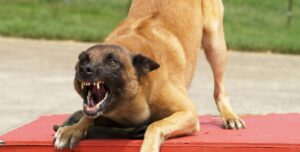 What Causes Aggression in Dogs?
