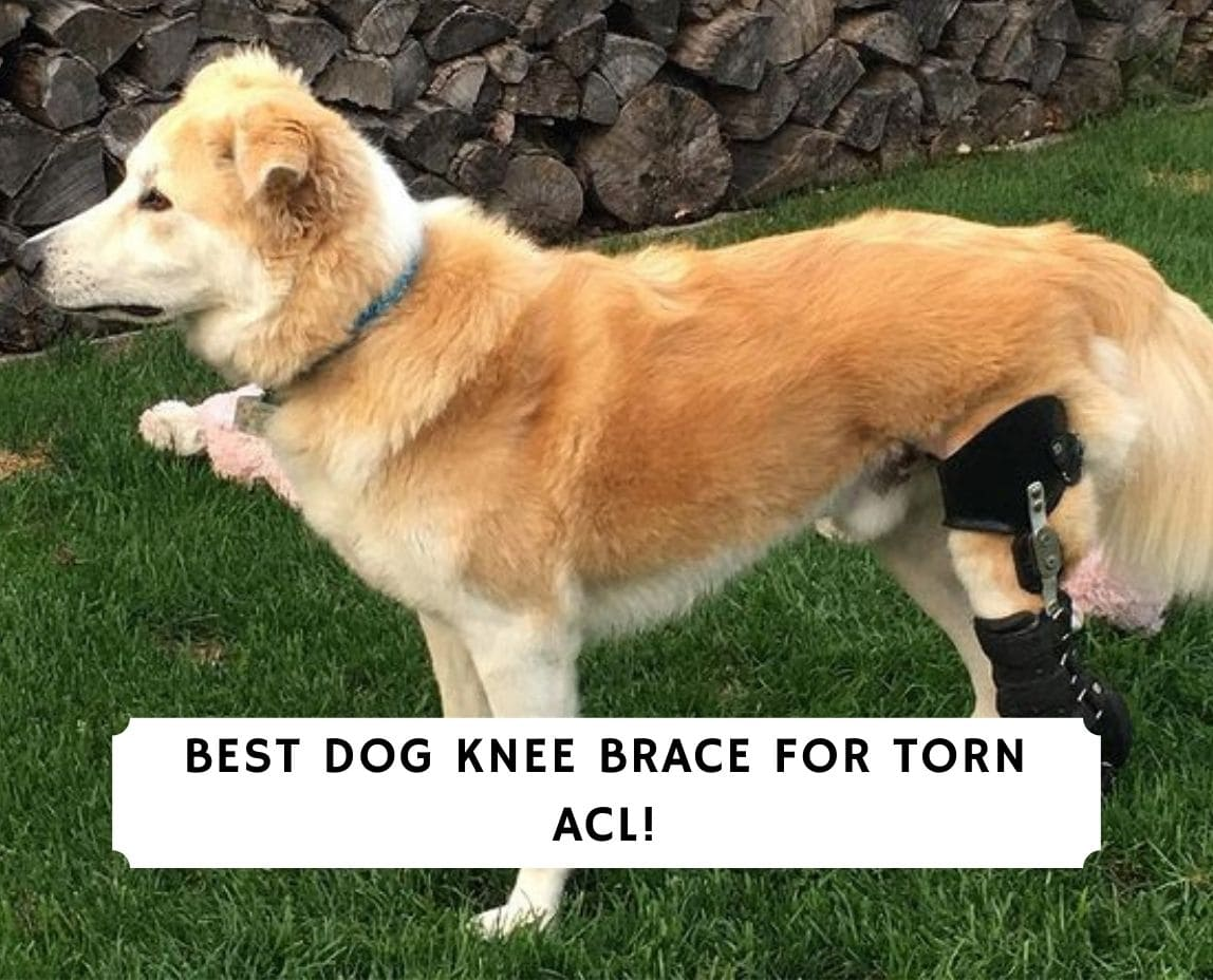 best dog knee brace for torn acl