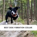 best dog vibration collar