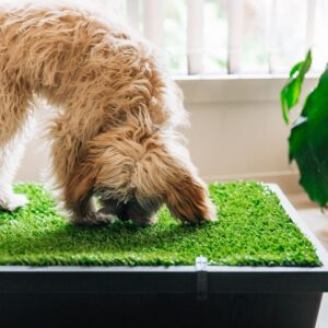 best ground cover for dogs to poop