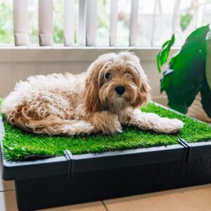 best material for dog poop area