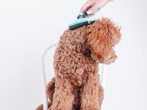brush for poodle hair