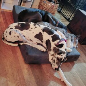 calming dog beds made in the usa