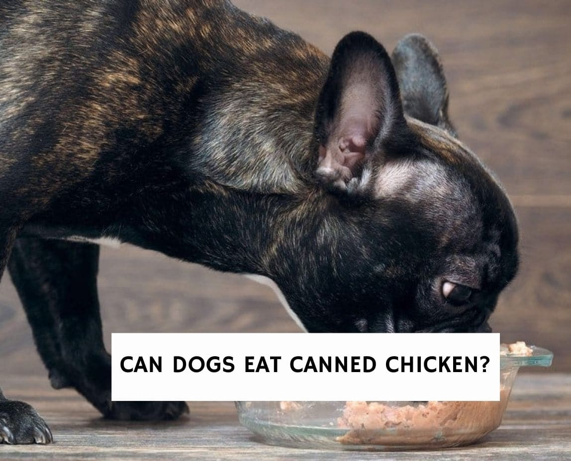 Can Dogs Eat Canned Chicken?