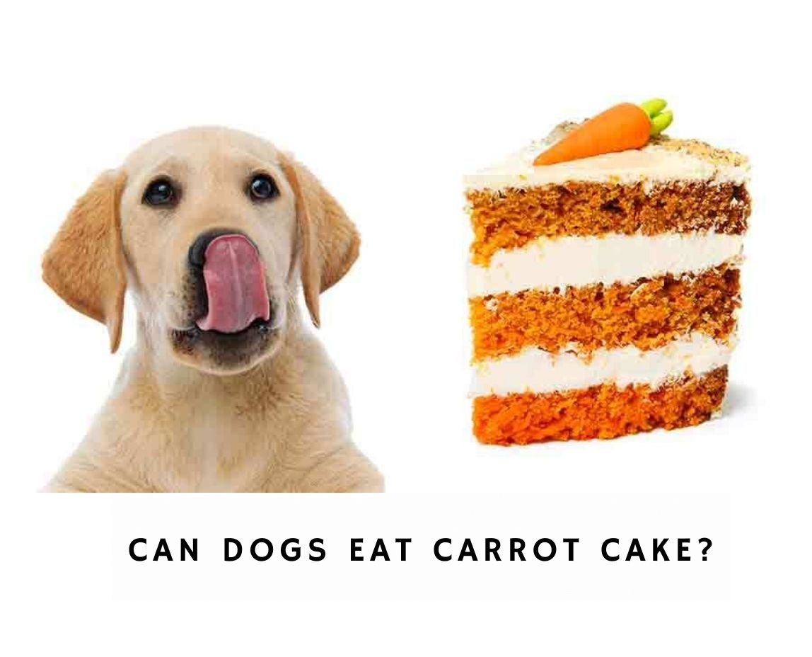 Can Dogs Eat Carrot Cake?