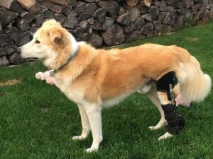 canine knee brace for torn acl