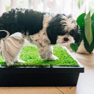 dog poop area ideas