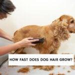 How Fast Does Dog Hair Grow?